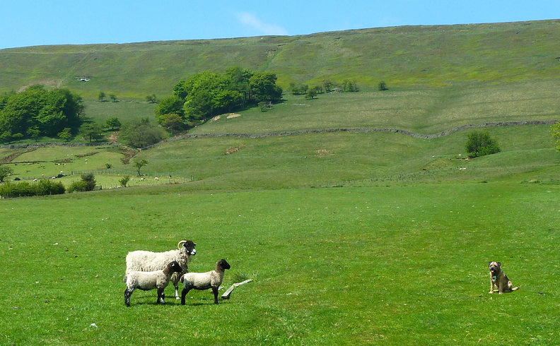 edale country day 2013 81.jpg