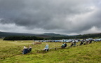 Longshaw Sheepdog Trials